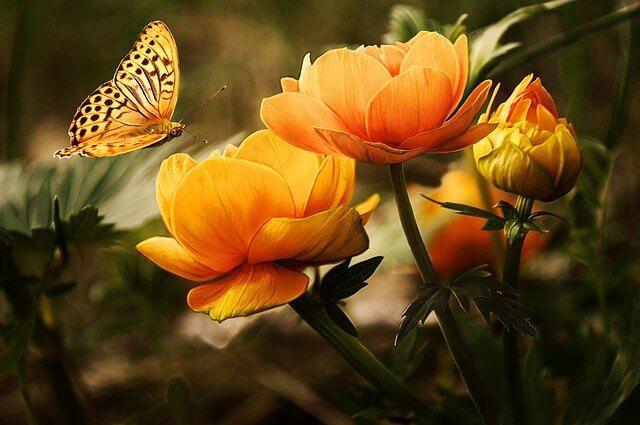 horoscopo de las flores