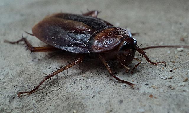 interpretar el sueño de soñar con cucarachas