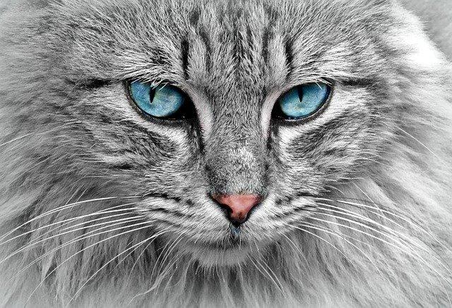 interpretar el sueño de soñar con gatos y otros felinos
