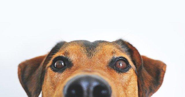 interpretar el sueño de soñar con perros